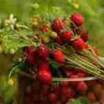 Вкусные и полезные травяные чаи